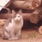 猫好きの人に埋込型の送水口をオススメする