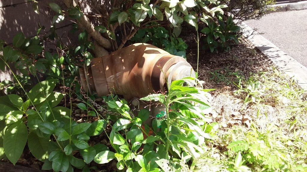 木陰で涼む送水口。