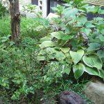 【庭が草ぼうぼうな人向け】庭にアレを置いたら、ものすごく絵になるんではないか