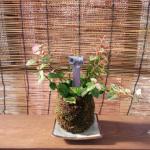 憧れの送水口庭園を実現させてくれる、苔玉