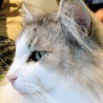 猫カフェを消防法的に分類して「18歳未満立入禁止の社交場」にする遊び